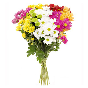Colored Chrysanthemums