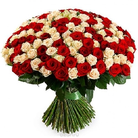 101 White and Red Roses